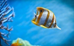 Coral-Reefs-Fish-645510