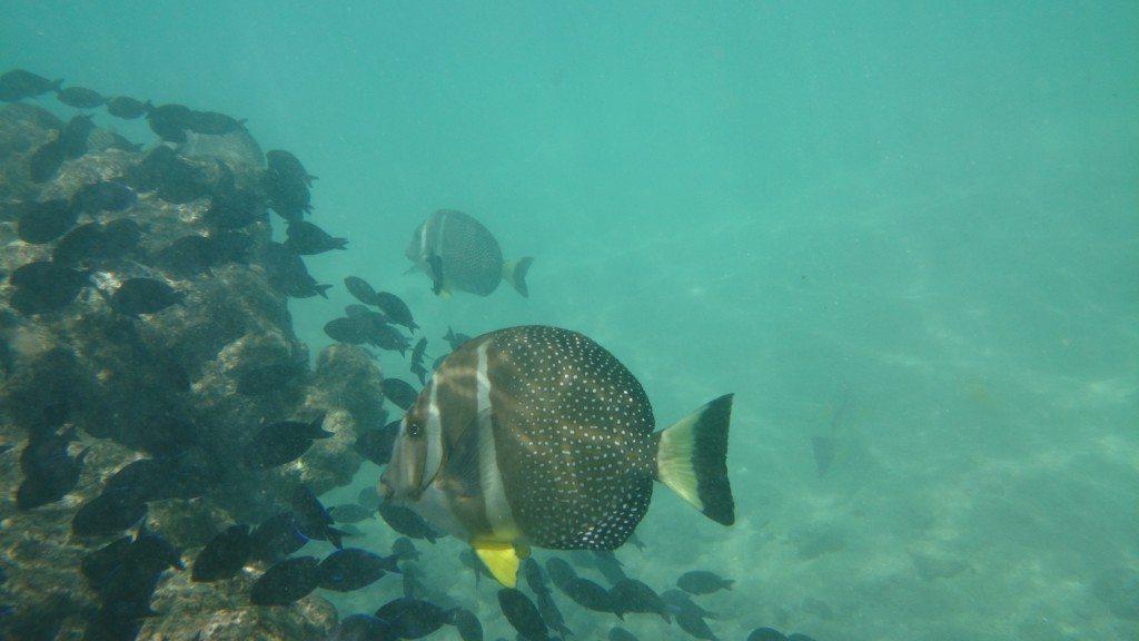 how-to-snorkel