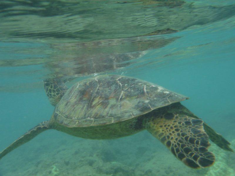 snorkeling-etiquette