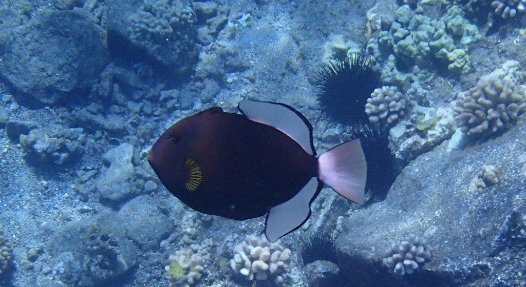 best-snorkel-bags
