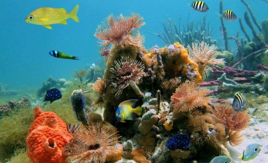 best-snorkeling-costa-rica