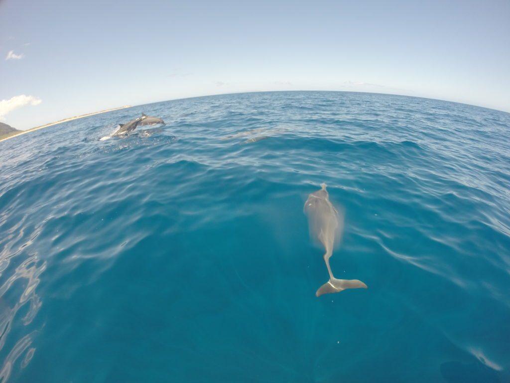 Napali_Coast_Dolphin_snorkel-tours