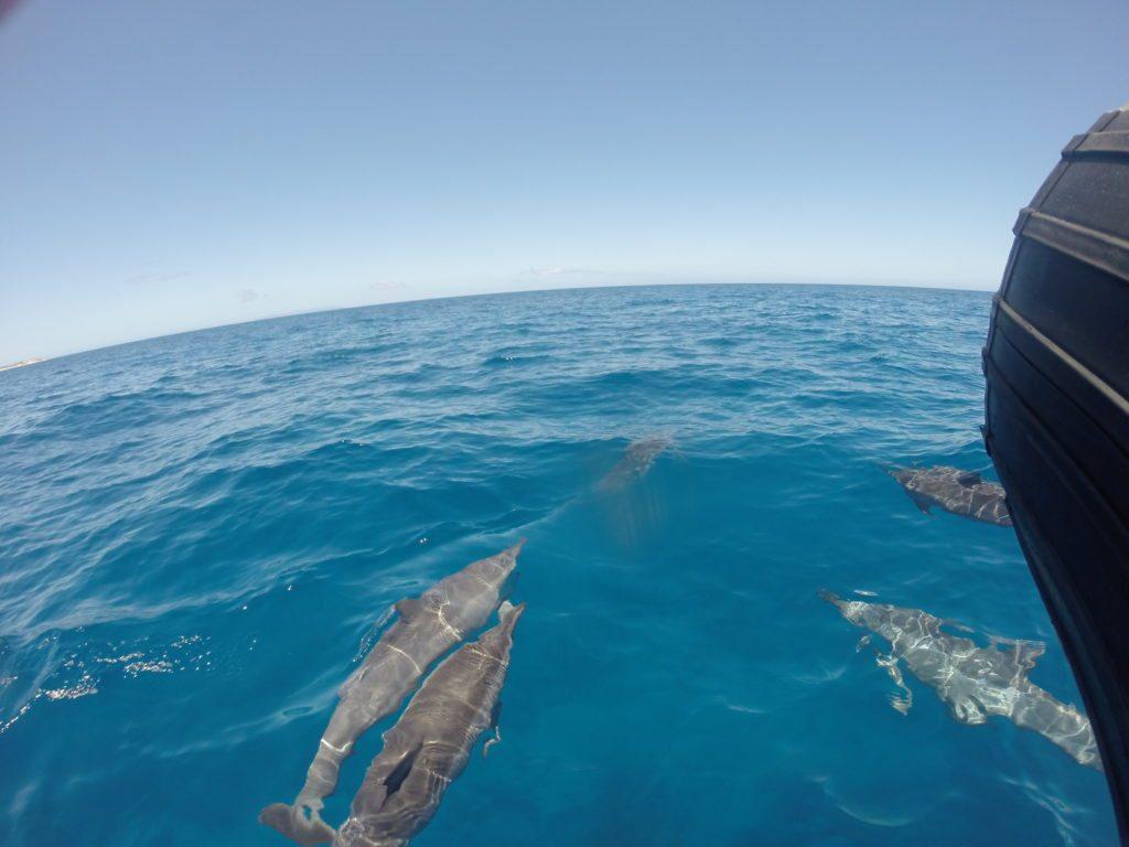 Dolphin_tour_Napali_Kauai-snorkeling-on-kauai