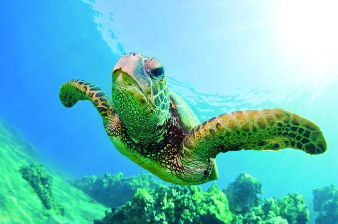 snorkel tour on Oahu at Turtle Canyon