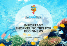 Beginners Snorkeling with Yellow Fish