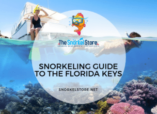 Guide to Snorkeling the Florida Keys